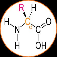 pulsar oxygène barophorèse - acides aminés